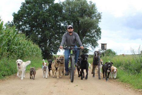 Curs de maneig i control de manada de gossos amb Hatu Gonzalez